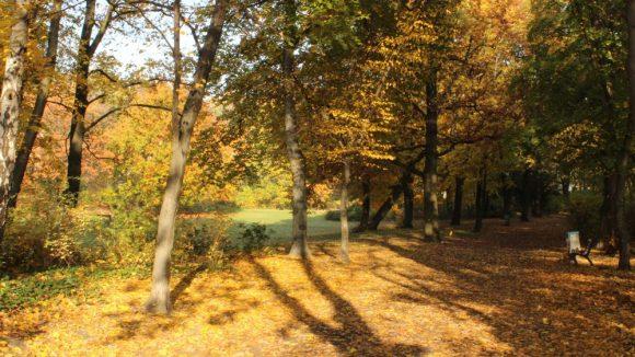Der Johannisthaler Park.