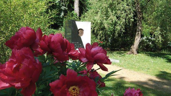 Mume-Pflanze in dunklem Rot schmückt auf einem grünen Friedhof.