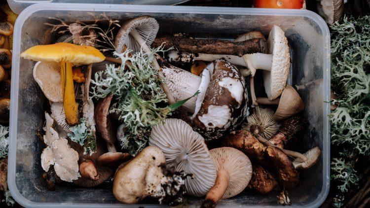 In den Berliner und Brandenburger Wäldern kannst du viele Pilze finden. Doch sind sie alle genießbar?