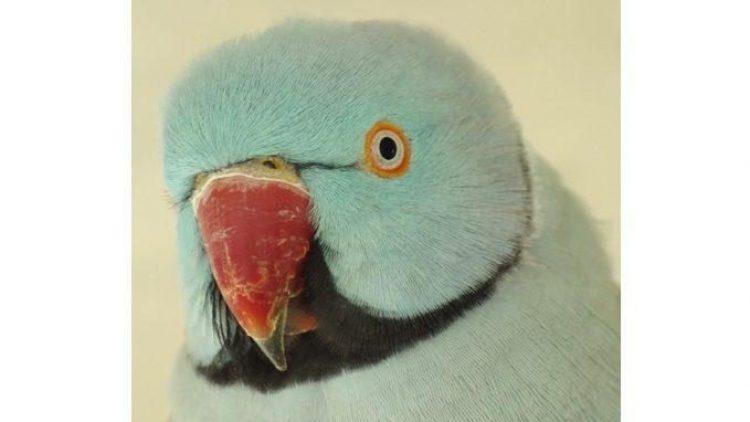 Ja, dieser hübsche Vogel ist tatsächlich nicht aus Plüsch!