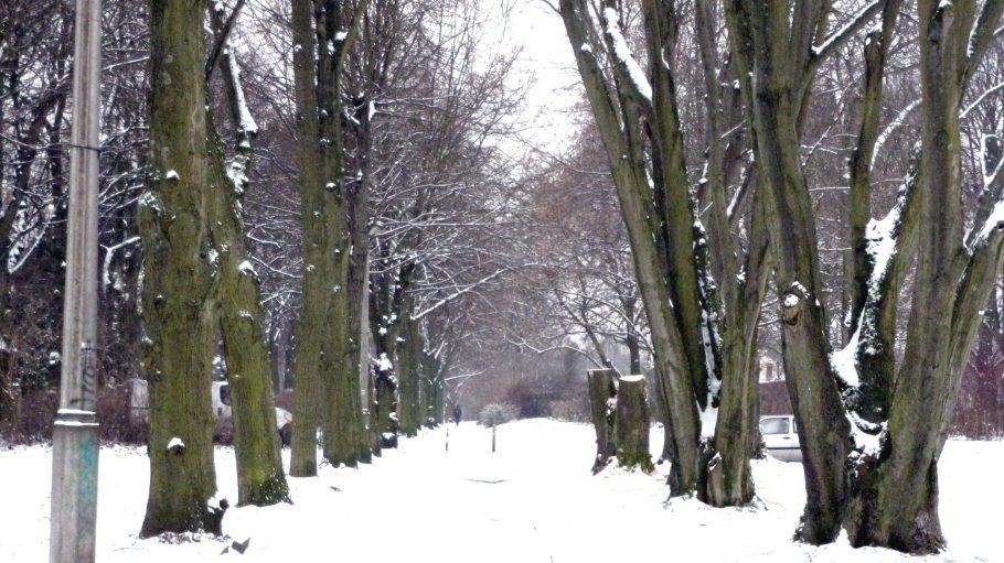 Winterlicher Spaziergang in Alt-Hohenschönhausen.
