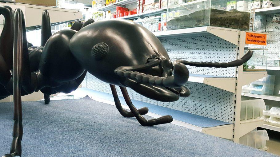 Du interessierst dich für Ameisen? Im Antstore in Steglitz kannst du den Grundstock für dein eigenes Volk legen.