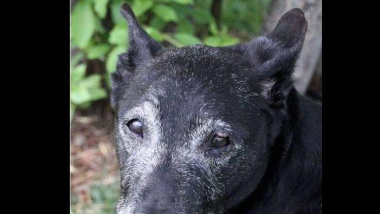 Wer hat ein Herz für einen alten Hund?