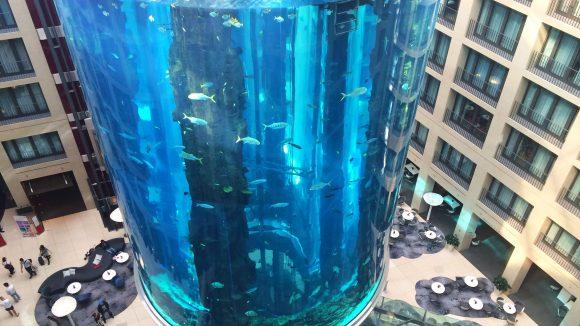 Und so kennen die Besucher das XXL-Aquarium im DomAquarée schließlich.