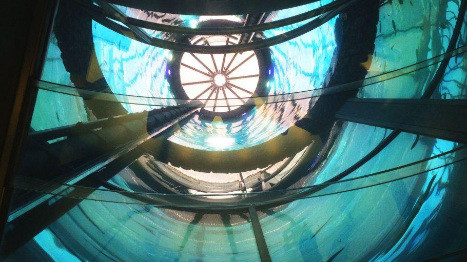So sieht es aus, wenn man aus den den Tiefen des AquaDoms mit dem gläsernen Aufzug nach oben fährt.