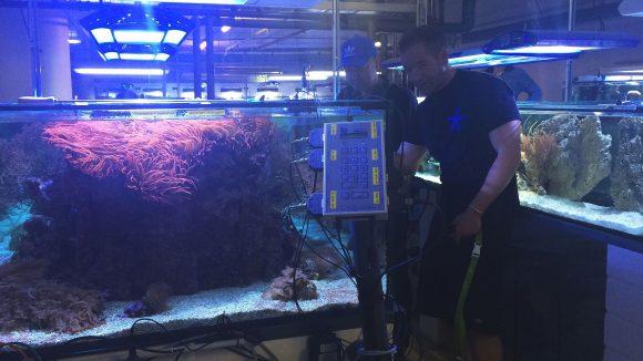 Viele bunte Aquarien auch unter Tage im Aquarium mit Zoolizenz.