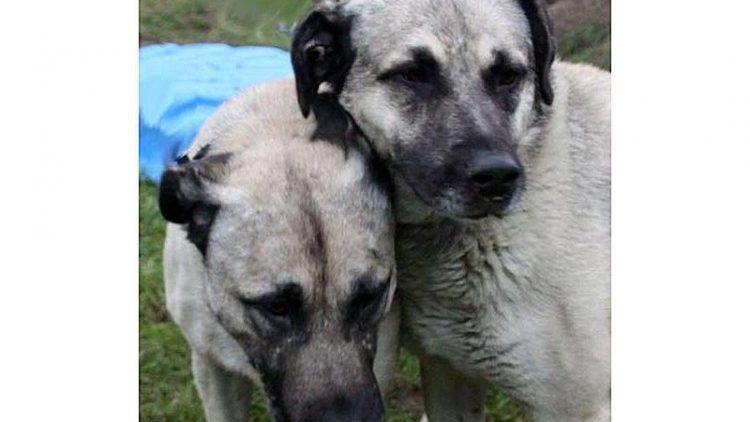 Arthus und Brutus warten seit Anfang Oktober im Tierheim Berlin auf ein neues Zuhause.
