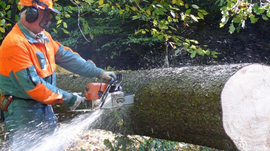 Im kleinen und großen Tiergarten fallen auch gesunde Bäume der Säge zum Opfer.