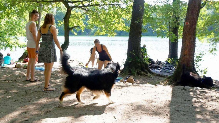 Beißt sich das? Im Schlachtensee wird gern gebadet – aber ein Teil gehört (noch) zum Hundeauslaufgebiet.