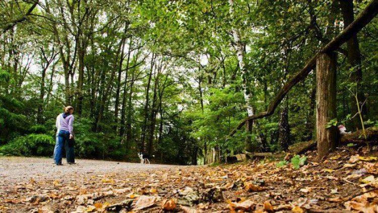 Der Grunewald wird von den Berliner Forsten gepflegt. Ihnen gelingt es ausgezeichnet, eine Million Besucher pro Jahr und den Naturschutz unter einen Hut zu bringen.