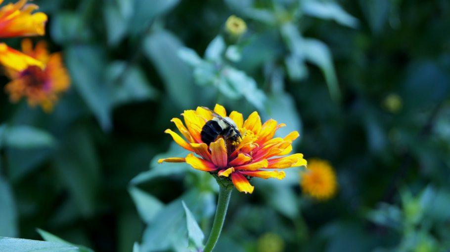 Rettet die Bienen! Folgende Imker und Bienen-Fans verraten, wie.