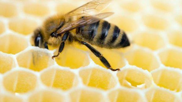 In Berlin boomt die Bienenszene, in Brandenburg fehlt es an Imkernachwuchs. Da hilft die Hauptstadt gern weiter.