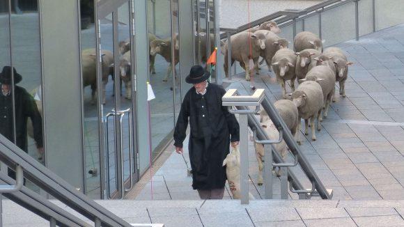 """""""Weg da"""", schreit der Schäfer, als er mit seiner 15-köpfigen Schafsherde die Treppe heraufkommt. In der Rechten träg er ein kleines Lämmchen an den Vorderläufen, damit die Meute ihm auch brav folgt."""
