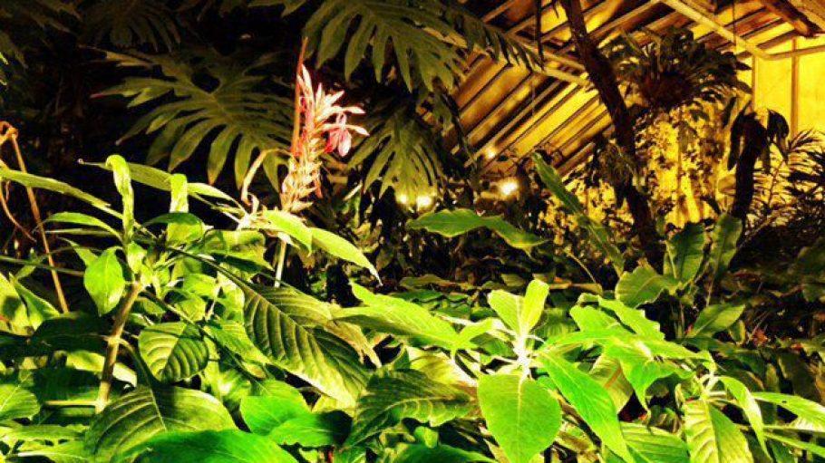 In den Innenräumen des Botanischen Gartens ist es selbst im Winter mollig warm.