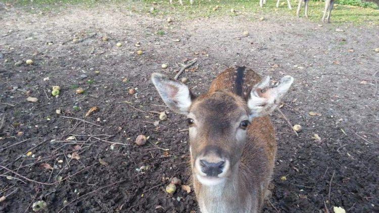 Huhu! Das Wildgehege im Botanischen Volkspark erfreut sich nicht nur bei Kindern großer Beliebtheit.