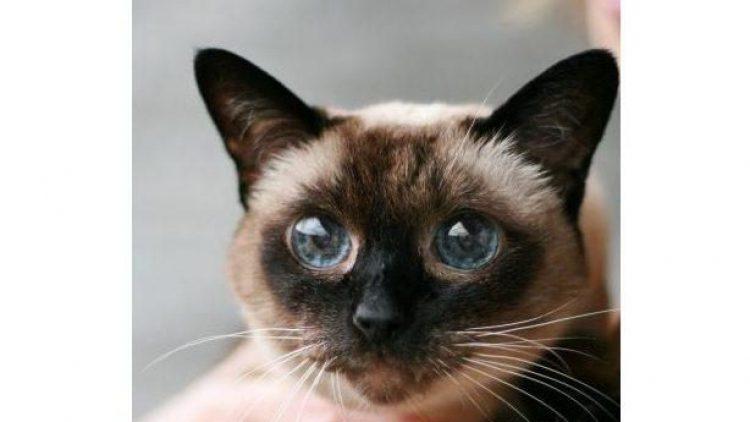 Du hast ein Herz für ältere Tiere? Dann gib der sanften Cleo ein neues Zuhause!