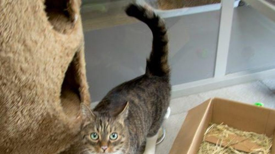 Hier steht nun die kleine Daisy und schaut mit ihren wunderschönen türkis-blauen Augen in die Kamera herein.