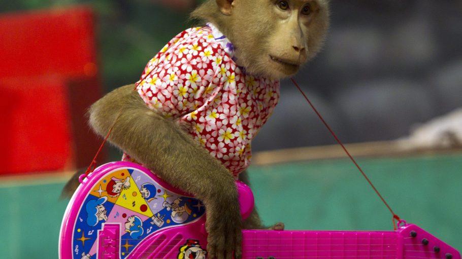 Cello, Klavier, Schlagzeug, Gitarre: Die Mitglieder der Affenband haben sich auf verschiedenen Instrumenten eingespielt.