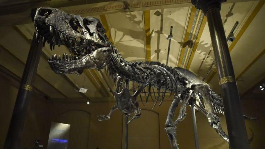 Auferstanden. Das Tyrannosaurus-Fossil im Museum für Naturkunde ist das einzige in Europa ausgestellte und kann seit dem 17. Dezember 2015 bewundert werden.