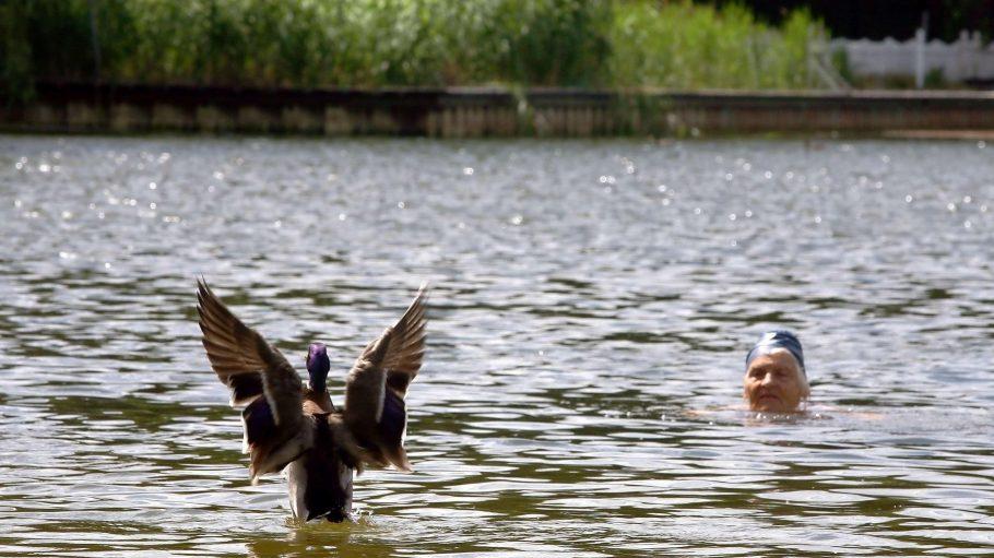Eine Frau schwimmt mit einer Ente trotz Badeverbots im Halensee. In den kommenden ein bis zwei Jahren soll das auch wieder offiziell möglich sein.