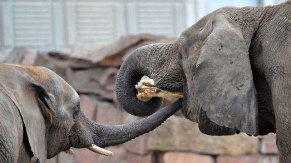 Auch die Elefanten müssen nicht mehr mit Holz heizen. Auf dem Dach des Dickhäuterhauses im Tierpark Friedrichsfelde wurde eine Photovoltaik-Anlage installiert.