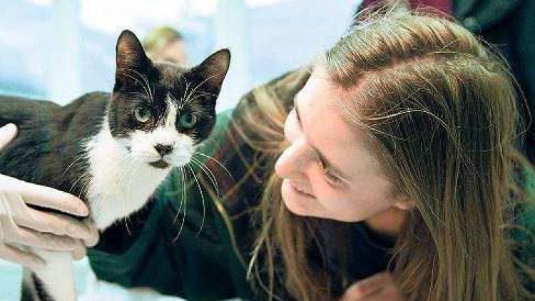 Elena Hanke mit ihrer Katze Miko, die sie nach jahrelangem Suchen wieder gefunden hat.
