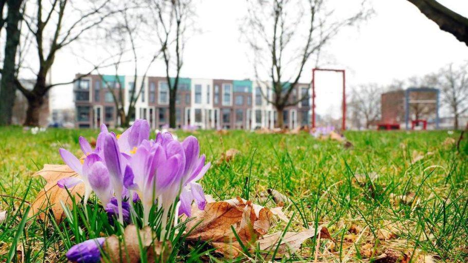 Es ist Frühling, das heißt, die Bauarbeiter können jetzt noch mehr anpacken - und das neue Viertel rund um die Heidestraße blüht auf, in jedem Sinne...