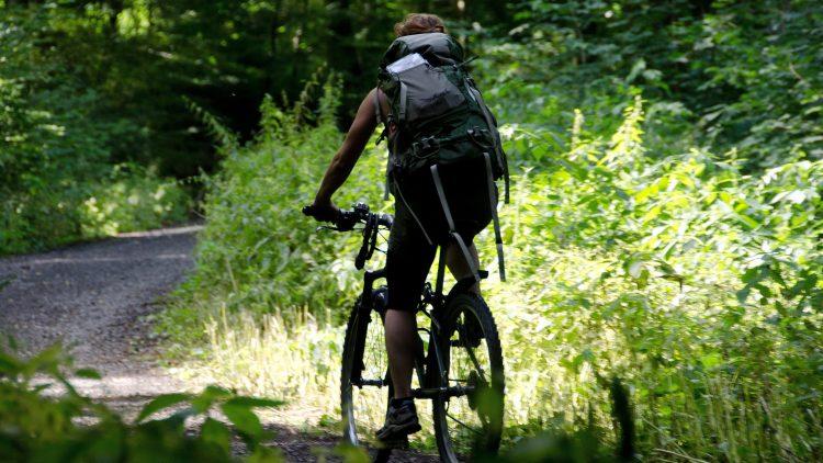 Neben viel Wasser prägt auch Wald diese Radtour durch Köpenick.