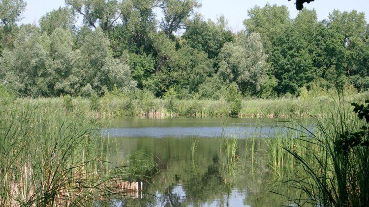 Idylle mit Schilf: Der Faule See