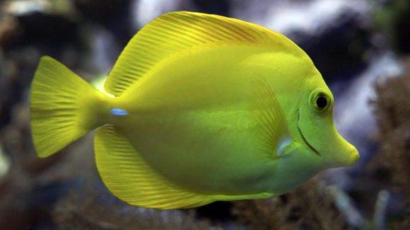 Solche Meeresbewohner kannst du dir in Berlins drittem Aquarium bald aus nächster Nähe anschauen.