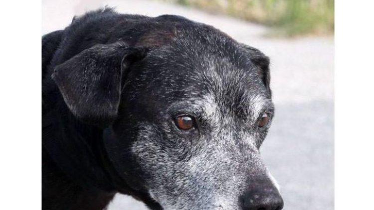 Fredos Herrchen ist gestorben - jetzt wartet der nette Rüde bereits seit etwa sechs Wochen im Tierheim Berlin auf ein neues Zuhause.