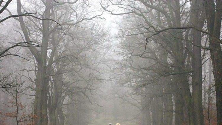 Auf der Suche nach der letzten Ruhestätte: Bald kann man sich auch mitten in Berlin unter Bäumen beerdigen lassen.