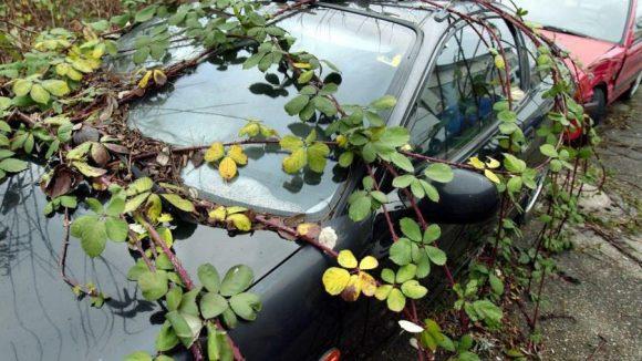 Manche Autobesitzer lassen ihre ausrangierten Fahrzeuge einfach am Straßenrand stehen.
