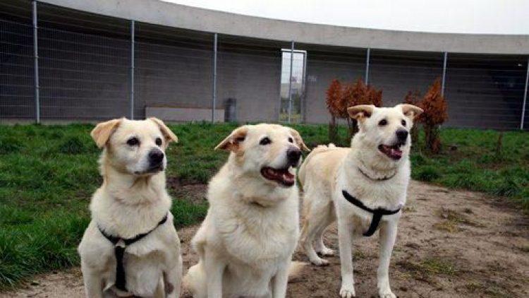 Rocki, Diva und Bechi möchten als Familie gern zusammenbleiben.