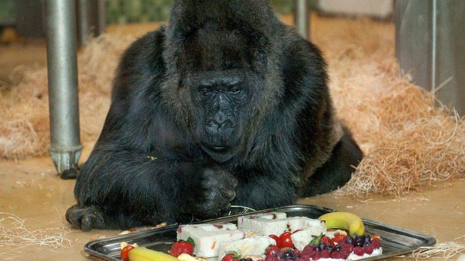 Dieses Festmahl ließ sich Fatou zu ihrem 55. Geburtstag schmecken. Auch heute soll sie wieder eine Torte bekommen.