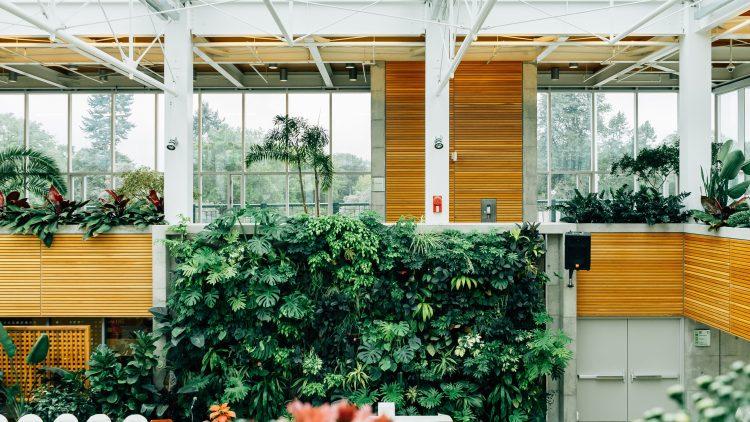Mit Raumbegrünung werden Wohnzimmer und Büro zu echten Wohlfühlorten.