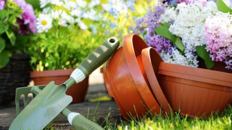 Wer neues Equipment fürs Gärtnern braucht oder einfach nur ein paar nette Pflanzen oder Gartenmöbel sucht, muss nicht immer in den anstrengenden Großmarkt fahren. QIEZ kennt auch die kleinen Geschäfte für Hobbygärtner!