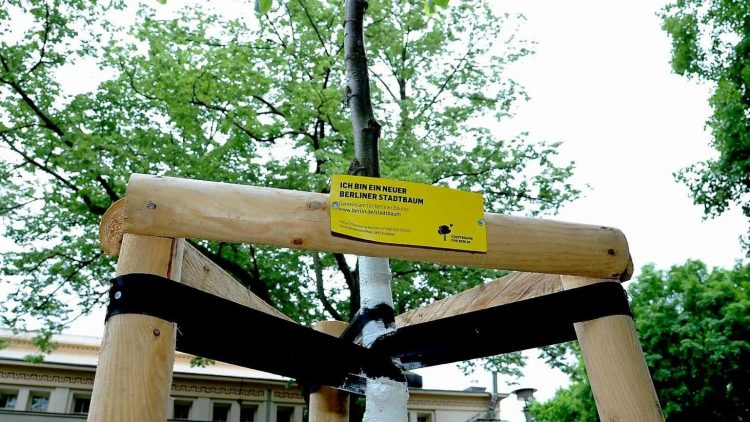 Gut Holz. Schon 3600 Bäume konnten dank der Kampagne gepflanzt werden. Jetzt folgen 600 weitere.
