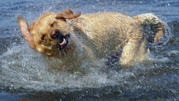 Hundebadestellen gibt es am Grunewaldsee zu Hauf, aber auch am Schlachtenseee und der Krummen Lanke dürfen Vierbeiner an ausgewiesenen Ufern abtauchen.