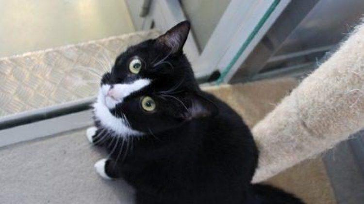 Hanny lebt seit Oktober 2014 im Tierheim und sehnt sich sehr nach einem neuen Zuhause.