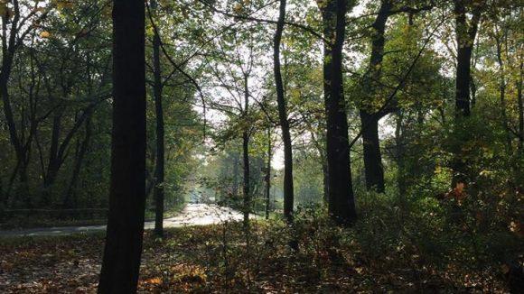 Heinrich-Laehr -Park