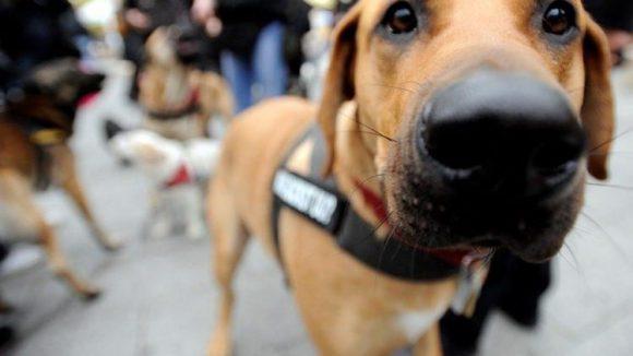 Berlins Hunde und ihre Herrchen und Frauchen müssen sich künftig häufiger mit ihrer Leine arrangieren.