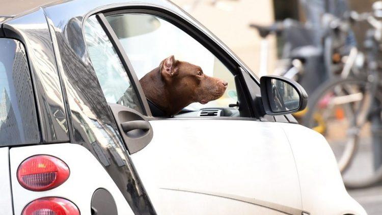 Den Hund im Urlaub zurücklassen? Das muss nicht sein! Ein Berliner Start-up empfiehlt Reiseziele für Zwei- und Vierbeiner.