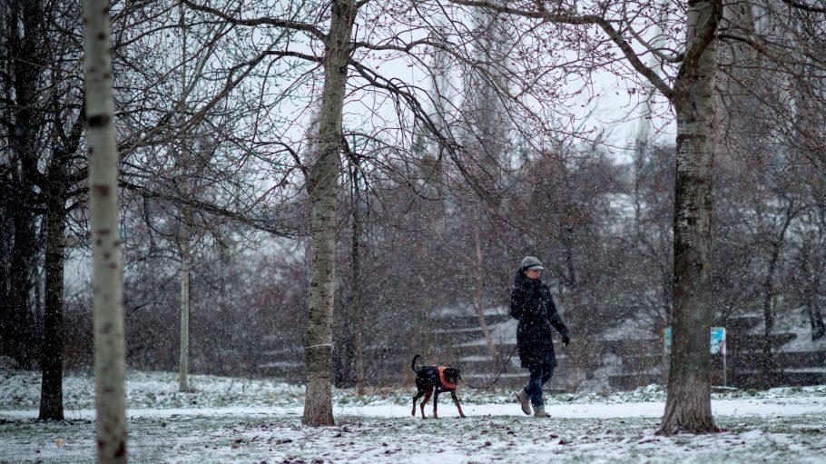 Solllen Hunde in den Berliner Parks frei herumlaufen dürfen oder nicht? Der Bello-Dialog gibt eine eindeutige Antwort.