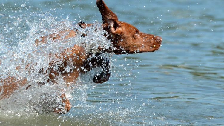 Hund im Wasser? Könnte bald schwierig werden ...