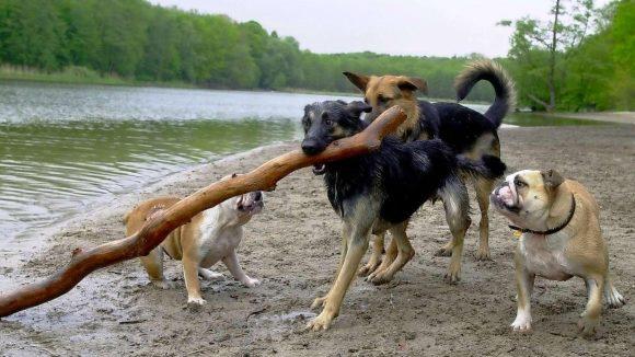 Geht es am Grunewaldsee zu wild zu? Die CDU-Fraktion Charlottenburg-Wilmersdorf will das Hundeleben bremsen. Das Ufer, wo dieses Bild entstand, liegt allerdings in Zehlendorf.
