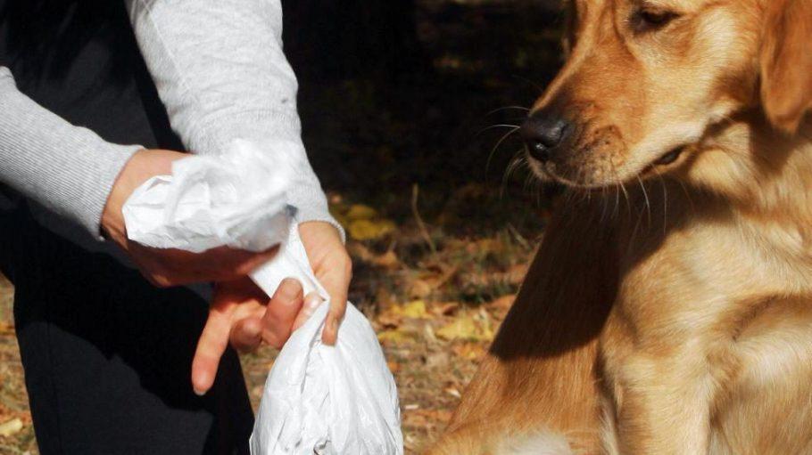 Tüten mit Hundekot gehören nicht in den Wald.