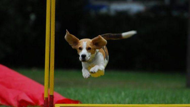 """Am Sonntag organisiert der """"Verein für Schutz- und Begleithundesport"""" in Lankwitz einen Tag der offenen Tür. Alle Hunde und ihre Herrchen sind willkommen."""