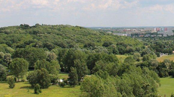 Der Kienberg soll weiterhin Waldcharakter haben.