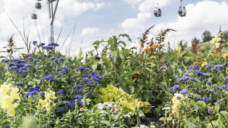Blühende Wiesen und eine Seilbahn darüber: Die IGA von ihrer schönsten Seite.